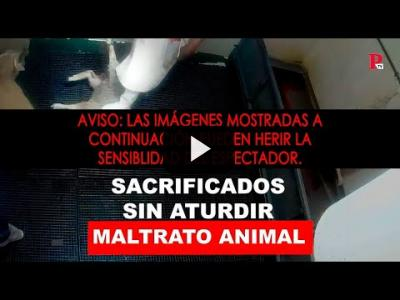 Embedded thumbnail for Video: MALTRATO ANIMAL: SACRIFICADOS SIN ATURDIR