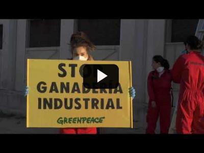 Embedded thumbnail for Video: ¡ACCIÓN! Entramos en la macrogranja de porcino más contaminante de España