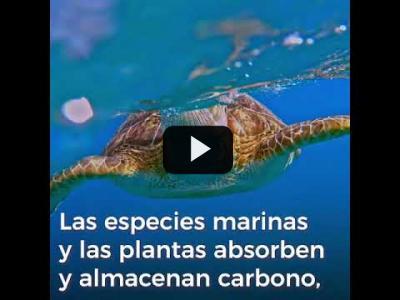 Embedded thumbnail for Video: Los océanos también están en crisis