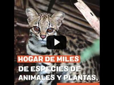 Embedded thumbnail for Video: Los incendios de la Amazonia no son un accidente