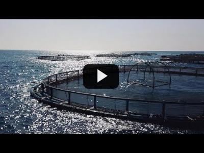 Embedded thumbnail for Video: ¿Podría la piscicultura salvar los mares y alimentar a más población mundial?