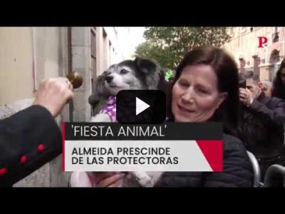 Embedded thumbnail for Video: 'Fiesta Animal': Almeida prescinde de las protectoras