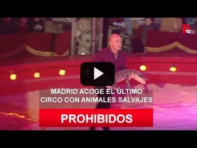 Embedded thumbnail for Video: Madrid acoge el último circo con animales salvajes