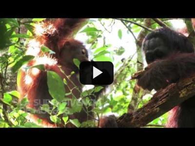 Embedded thumbnail for Video: Día Internacional de los Bosques | Greenpeace