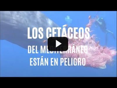 Embedded thumbnail for Video: Los cetáceos del Mediterráneo están en peligro