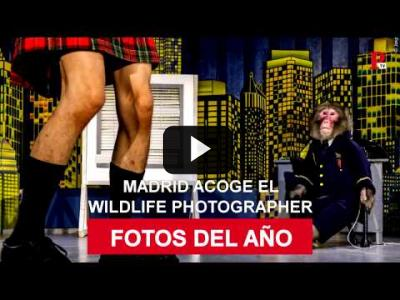 Embedded thumbnail for Video: Wildlife photographer of the Year regresa a Madrid
