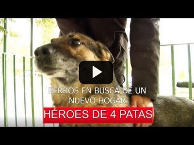 Embedded thumbnail for Video: Perros jubilados, héroes de cuatro patas