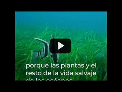 Embedded thumbnail for Video: Necesitamos océanos sanos para luchar contra la crisis climática