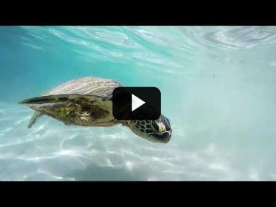 Embedded thumbnail for Video: Protege el hábitat de las tortugas