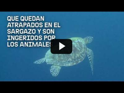 Embedded thumbnail for Video: Descubre el mar de los Sargazos