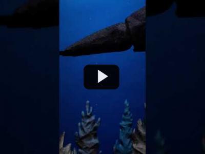 Embedded thumbnail for Video: Salvemos el fondo del mar