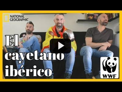 Embedded thumbnail for Video: El #cayetano ibérico está en peligro, ¿le echas una mano?